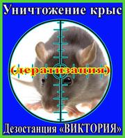 Уничтожение крыс (дератизация)