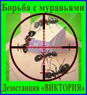 Борьба с домовыми муравьями