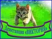 Дезостанция ВИКТОРИЯ,  услуги дератизации,  дезинсекции