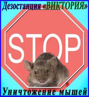 Уничтожение мышей (дератизация)