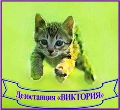 Дезостанция «ВИКТОРИЯ»,  уничтожение грызунов,  насекомых. - main